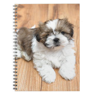 Young Chi Chu dog lying on parquet floor Notebook