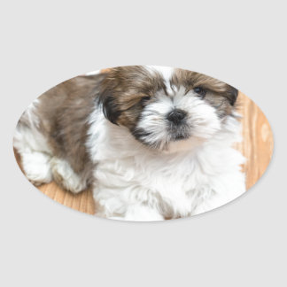 Young Chi Chu dog lying on parquet floor Oval Sticker