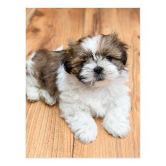 Young Chi Chu dog lying on parquet floor Postcard