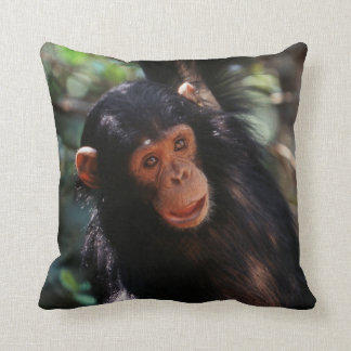 Young Chimpanzee hanging at forest Cushion
