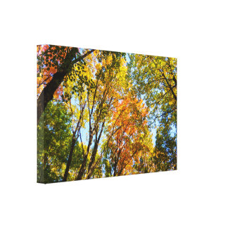 Young Colorful Trees Canvas Print