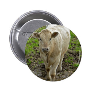 Young Cream Bull at water hole Pinback Buttons
