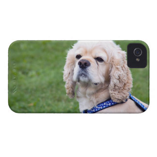 Young cute dog posing. iPhone 4 case