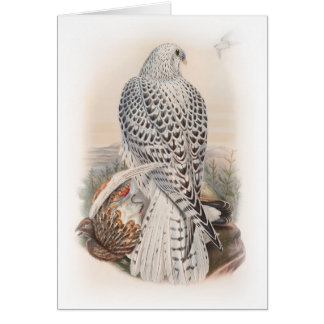 Young Dark Greenland Falcon Birds of Great Britain Card