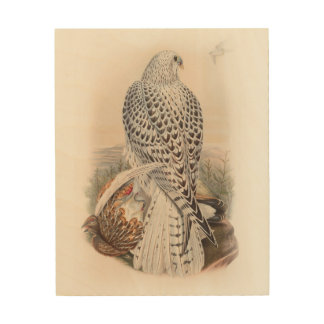 Young Dark Greenland Falcon Birds of Great Britain Wood Print