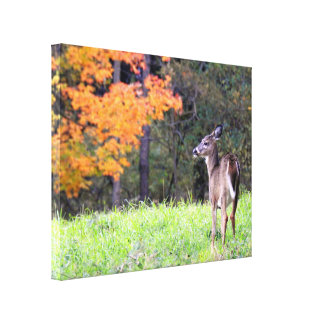 Young Deer in Autumn Canvas Print