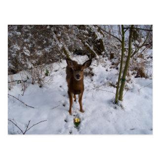 Young Deer In Winter Postcard