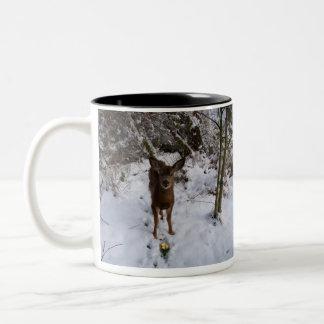 Young Deer In Winter Two-Tone Coffee Mug