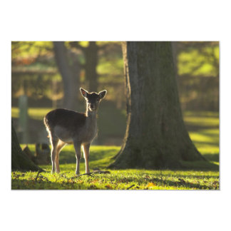 Young Deer Invitation