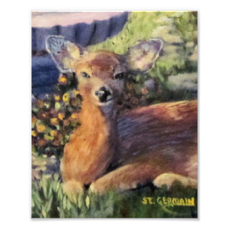 Young Deer Photo Print