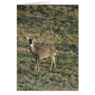 Young Doe In Field Blank Greeting Card