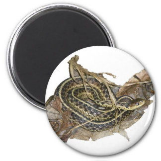 Young Eastern Garter Snake Coordinating Items 6 Cm Round Magnet