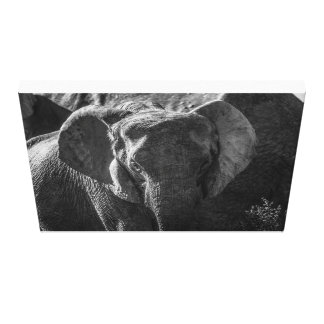Young Elephant, South Africa Canvas Print