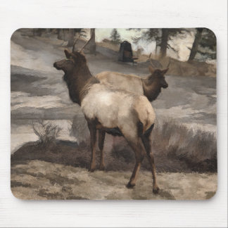 Young Elk Bucks   -  Banff Alberta Mouse Pad
