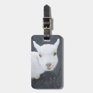 Young goat luggage tag