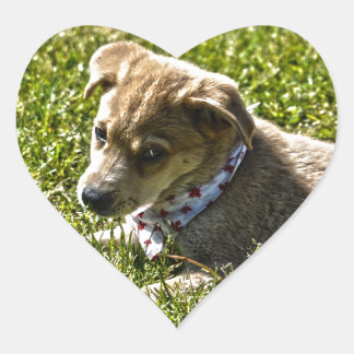 Young Golden Furred Puppy Pet-lover Gift Heart Sticker