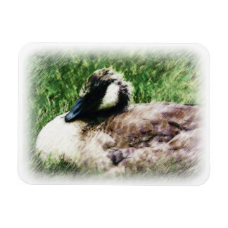 Young Goose - Sketched Drawing Rectangle Magnets