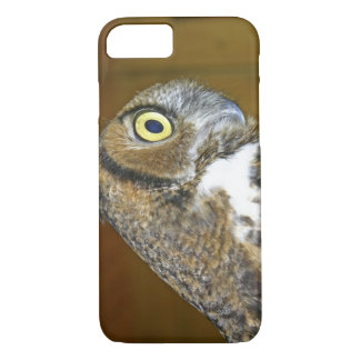 Young great horned owl indoors iPhone 7 case