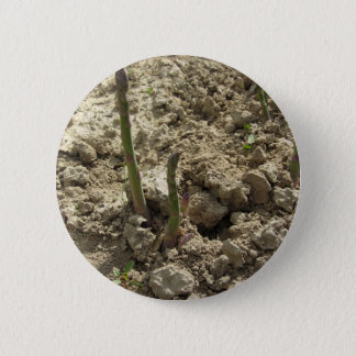 Young green asparagus sprouting from the ground 6 cm round badge