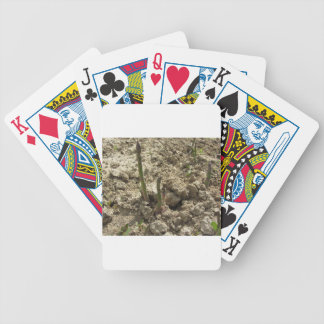 Young green asparagus sprouting from the ground bicycle playing cards