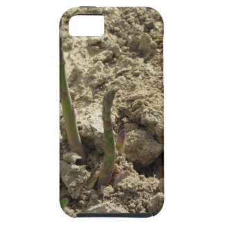 Young green asparagus sprouting from the ground iPhone 5 covers