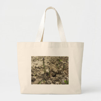 Young green asparagus sprouting from the ground large tote bag