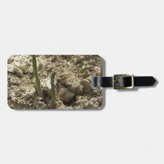Young green asparagus sprouting from the ground luggage tag