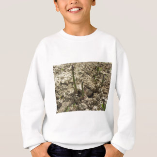 Young green asparagus sprouting from the ground sweatshirt