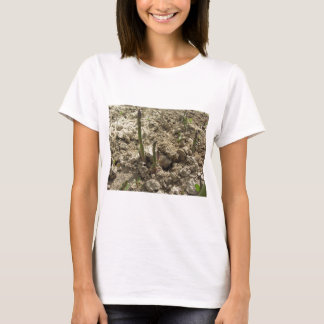 Young green asparagus sprouting from the ground T-Shirt