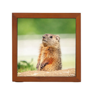 Young Groundhog Desk Organiser