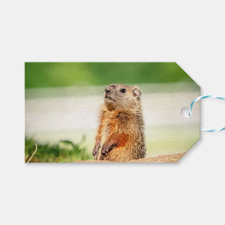 Young Groundhog Gift Tags
