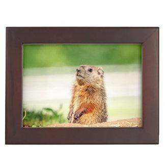 Young Groundhog Keepsake Box
