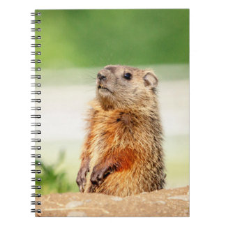 Young Groundhog Notebooks