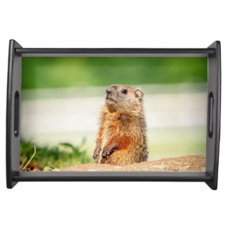 Young Groundhog Serving Tray