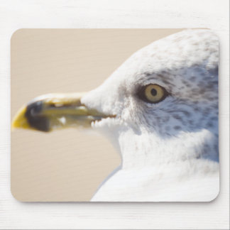 Young Gull Mouse Pad