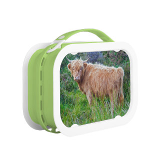 Young Highland Cow Lunch Box