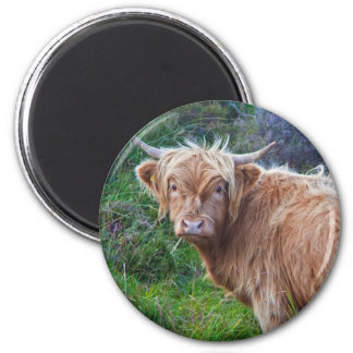 Young Highland Cow Magnet