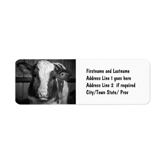 Young Holstein Dairy Bull Calf in Black and White Return Address Label
