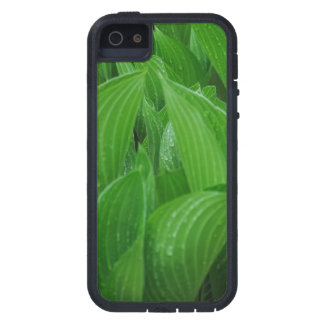 Young Hostas with Raindrops iPhone 5 Covers