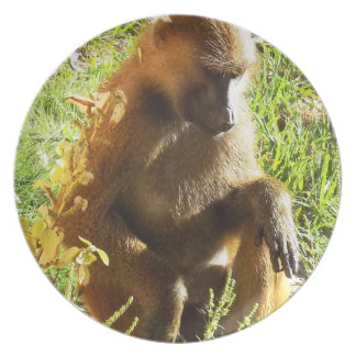 Young Juvenile Baboon Sitting and Looking Down Plate