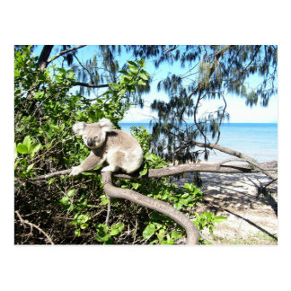 Young koala in a tree at the beach postcard