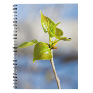 Young leaves notebooks