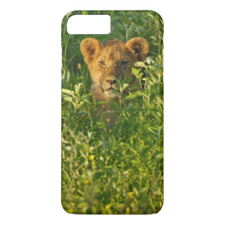 Young Lion (Panthera Leo) Stalking, Ngorongoro iPhone 7 Plus Case