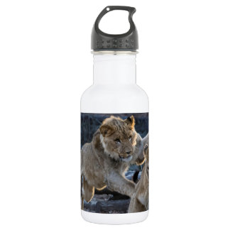 Young Lion Plays With Mom 532 Ml Water Bottle
