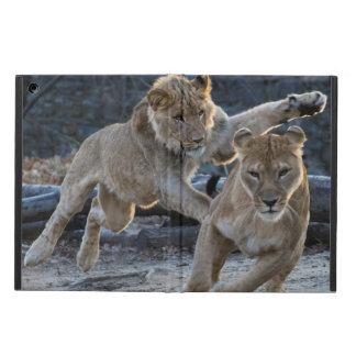Young Lion Plays With Mom Cover For iPad Air