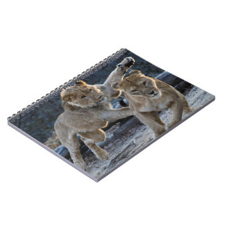 Young Lion Plays With Mom Note Books