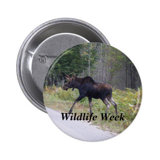 Young Moose About to Cross Road-Wildlife week 6 Cm Round Badge