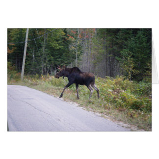 Young Moose Blank Card
