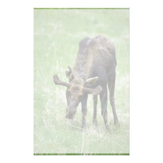 Young moose eating grass stationery