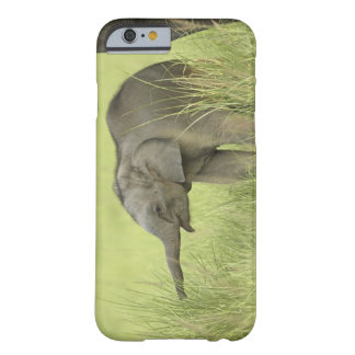 Young one of Indian / Asian Elephant,Corbett Barely There iPhone 6 Case